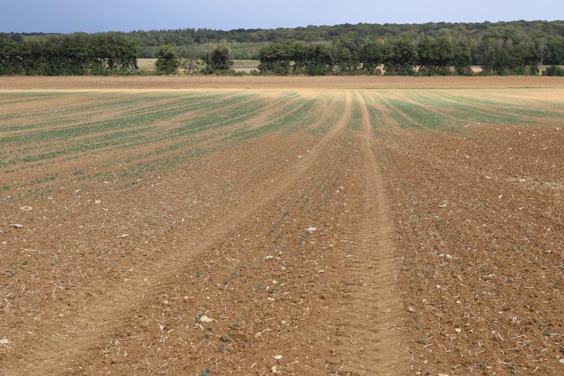 Levees-heterogenes-de-colza-selon-lhumidite-du-sol-